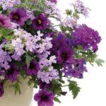 Feng Shui virágok